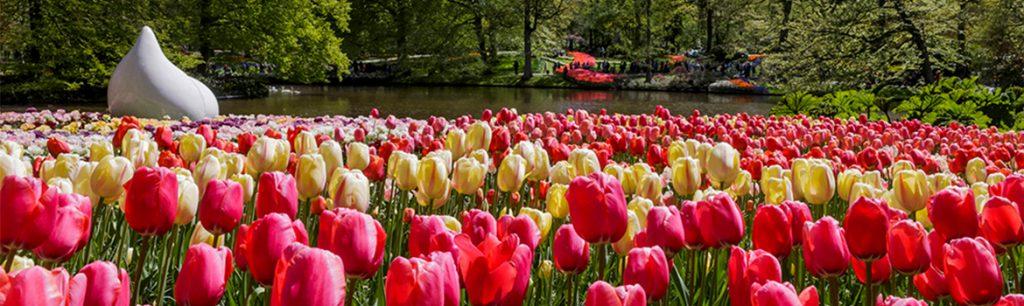 Bulbfields of Netherlands