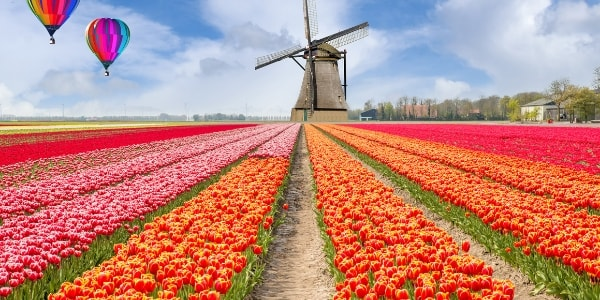 flower fields in holland