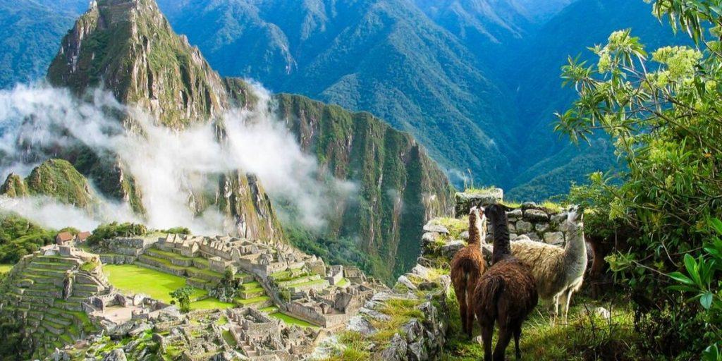 llamas watch over machu picchu
