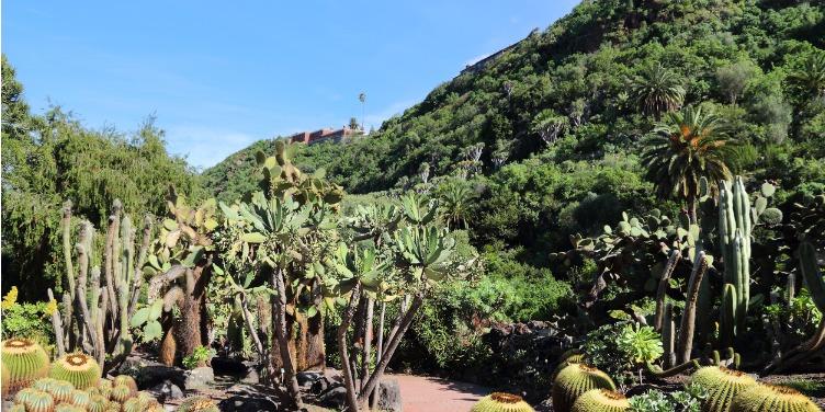 Pathway leading through Jardin Canario, a botanical garden in Gran Canaria